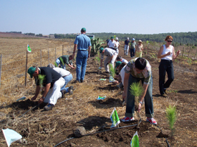 planting trees in Israel